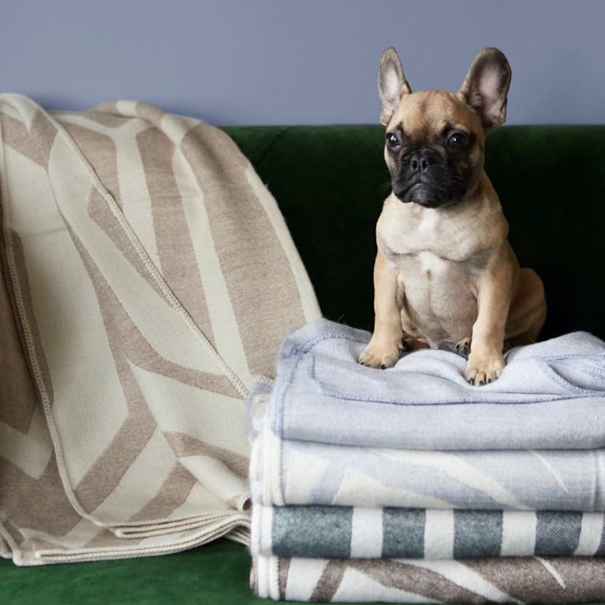 French bulldog sitting on folded Pepper Home fabric