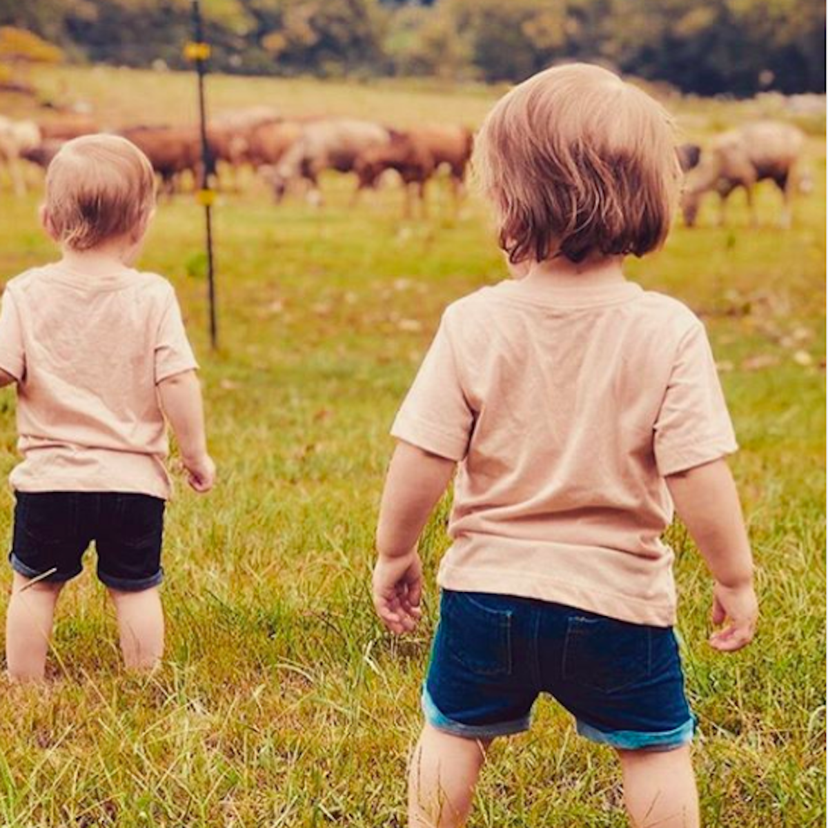 two twin toddlers in a field looking at cows
