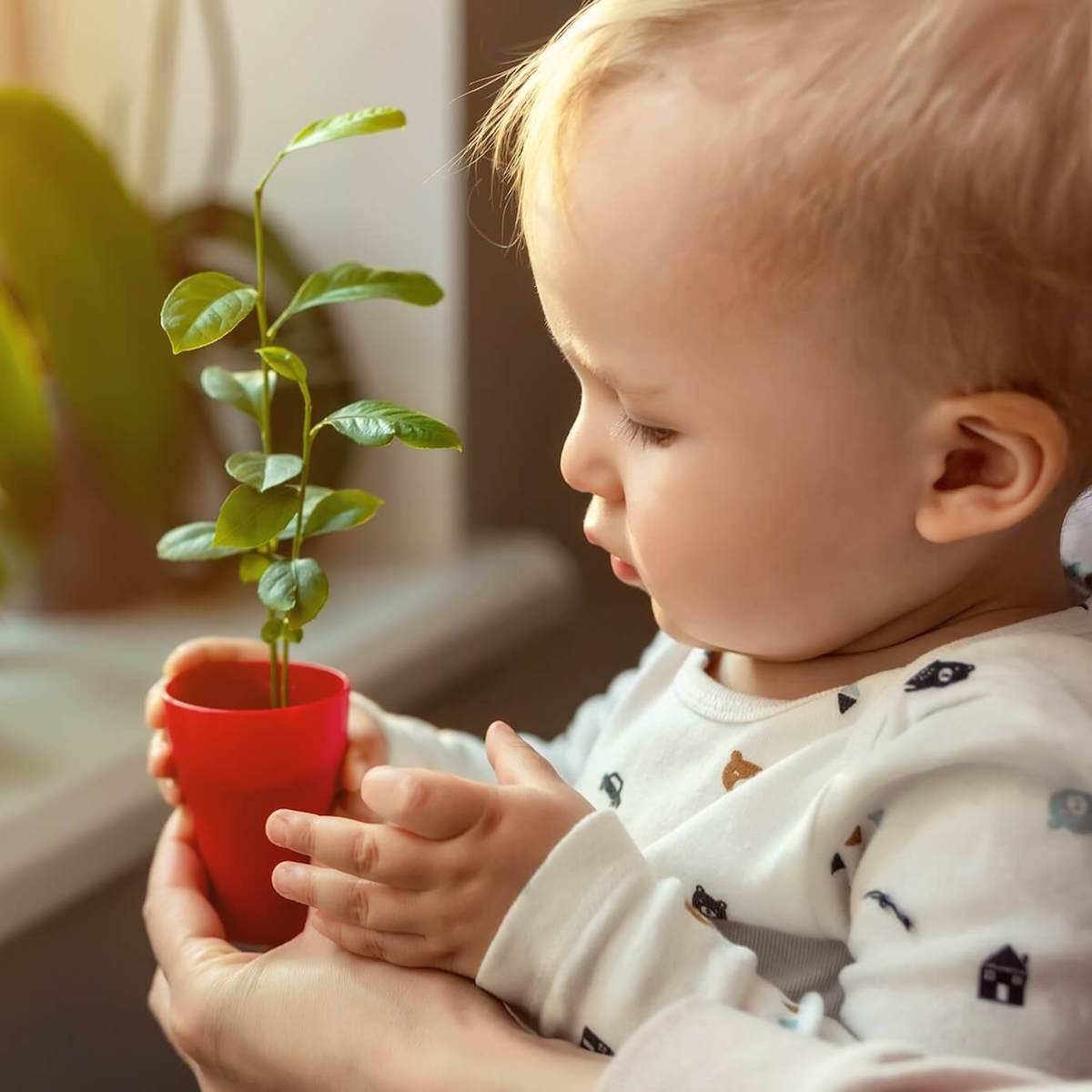 An infant wearing a onesie and looking at a small potted plant next to a window